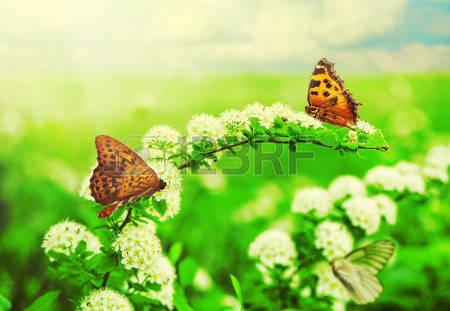 flores-y-mariposas-en-una-hermosa-pradera-de-verano